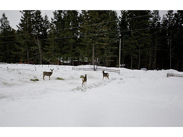 Main Photo: 1350 SODA CREEK Road in Williams Lake: Williams Lake - Rural North Land for sale (Williams Lake (Zone 27))  : MLS®# N233389