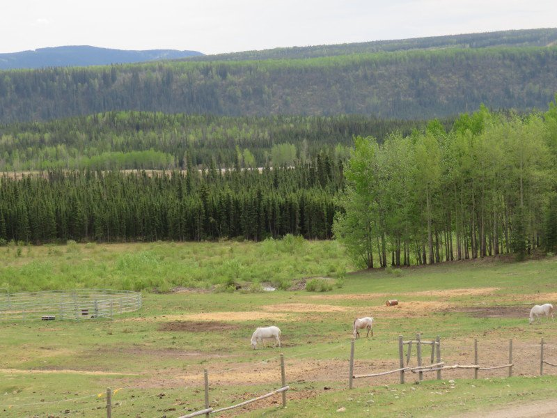 Photo 46: Photos: 26588 - 26606 SIKANNI CHIEF Road in Fort St. John: Fort St. John - Rural W 100th House for sale (Fort St. John (Zone 60))  : MLS®# R2191373