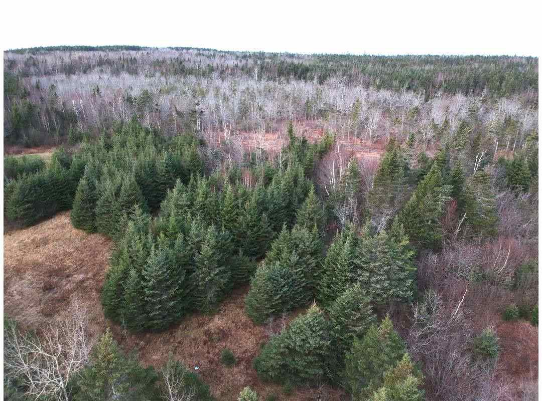 Main Photo: 1963 Gospel Woods Road in Arlington: 404-Kings County Vacant Land for sale (Annapolis Valley)  : MLS®# 202025022