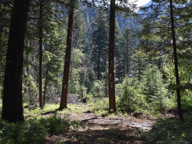 Main Photo: DL4361 DUFFY LAKE ROAD: Lillooet Lots/Acreage for sale (South West)  : MLS®# 152311