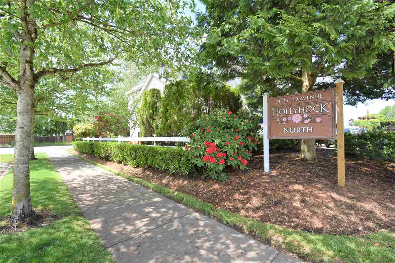 """Photo 19: Photos: 39 23575 119 Avenue in Maple Ridge: Cottonwood MR Townhouse for sale in """"Holly Hock"""" : MLS®# R2370536"""