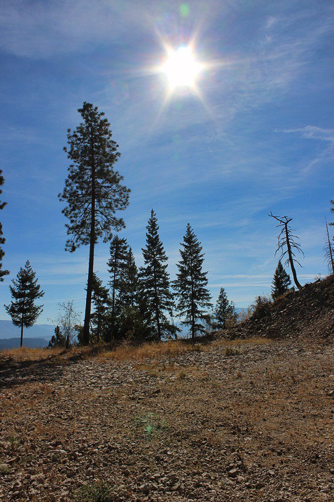 Photo 13: Photos: Lot 4 Recline Ridge Road in Tappen: Land Only for sale : MLS®# 10176926