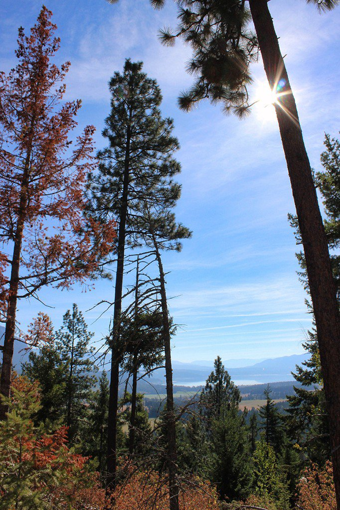 Photo 14: Photos: Lot 4 Recline Ridge Road in Tappen: Land Only for sale : MLS®# 10176926