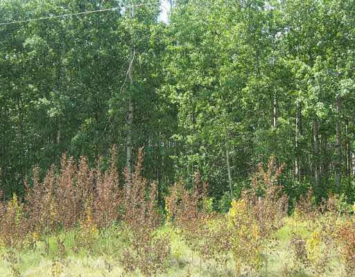Main Photo: 3 54208 RANGE ROAD 12: Rural Lac Ste. Anne County Rural Land/Vacant Lot for sale : MLS®# E4170241