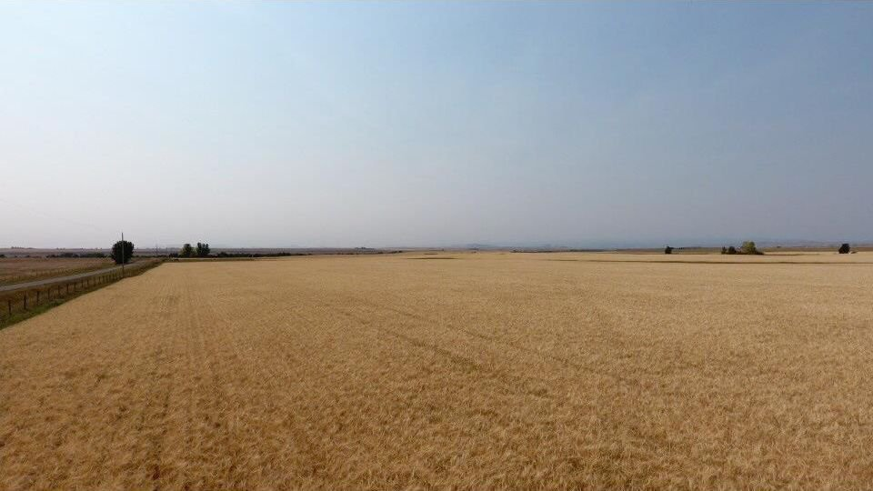 Main Photo: : Rural Foothills M.D. Land for sale : MLS®# C4137604