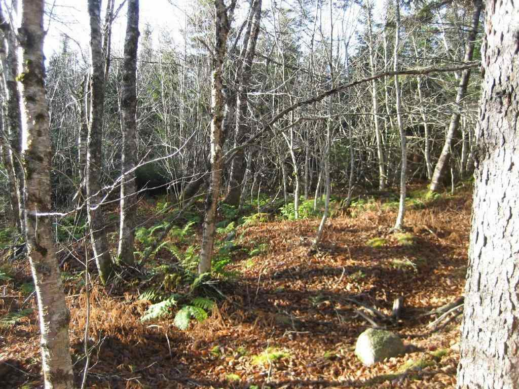 Photo 8: Photos: LOT HIGHWAY 107 in West Petpeswick: 35-Halifax County East Vacant Land for sale (Halifax-Dartmouth)  : MLS®# 3348670