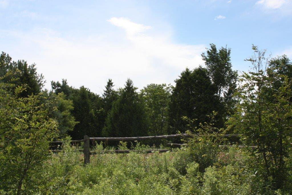 Photo 8: Photos: 11358 County Road 2 Rd in Grafton: Land Only for sale : MLS®# 511350277