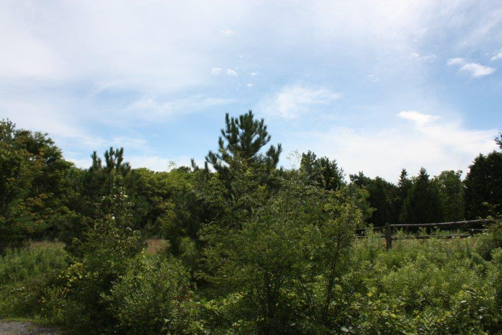 Photo 6: Photos: 11358 County Road 2 Rd in Grafton: Land Only for sale : MLS®# 511350277