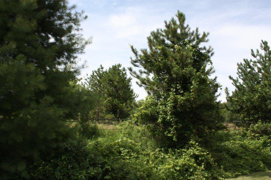 Photo 7: Photos: 11358 County Road 2 Rd in Grafton: Land Only for sale : MLS®# 511350277