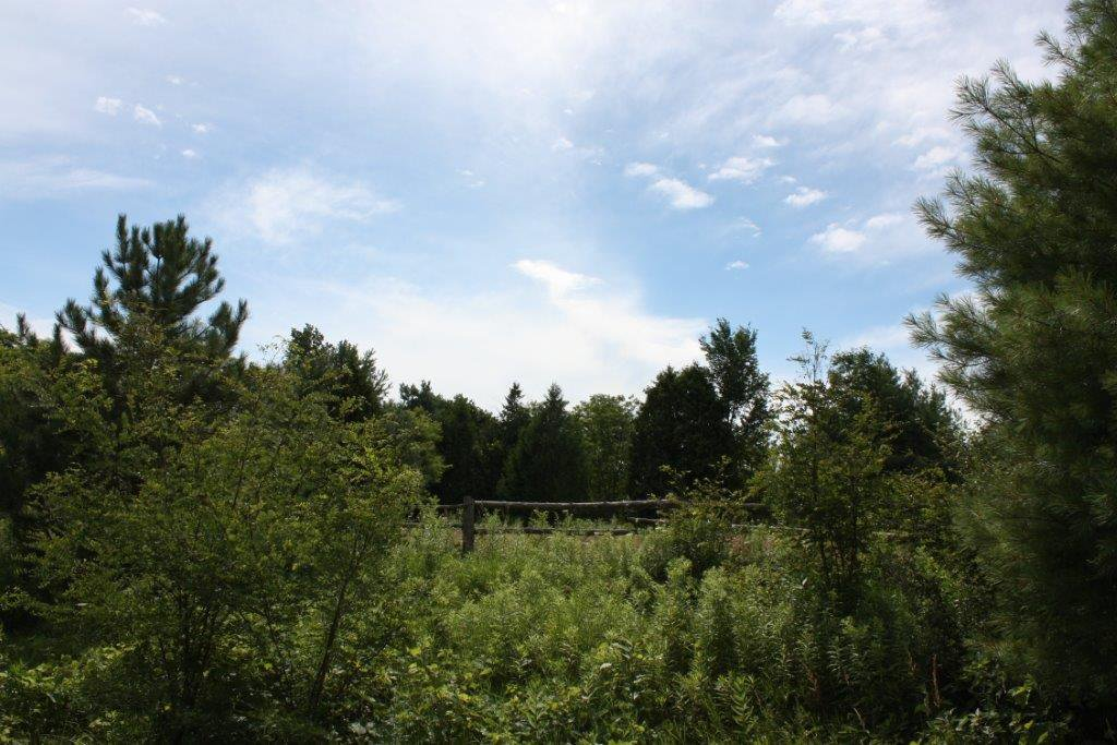 Photo 2: Photos: 11358 County Road 2 Rd in Grafton: Land Only for sale : MLS®# 511350277
