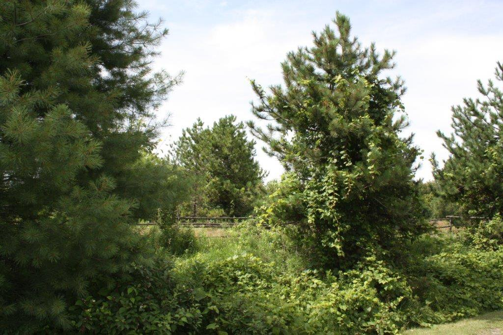 Photo 3: Photos: 11358 County Road 2 Rd in Grafton: Land Only for sale : MLS®# 511350277