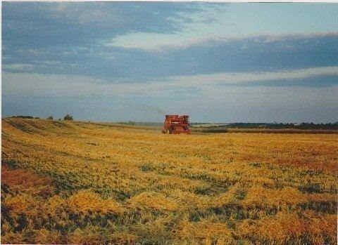 Photo 10: Photos: 22545 Lloyd Sdrd in Brock: Rural Brock House (2-Storey) for sale : MLS®# N3046124