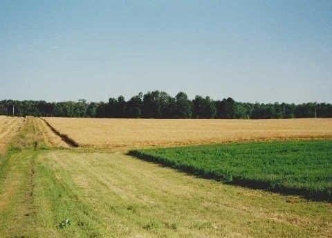 Photo 16: Photos: 22545 Lloyd Sdrd in Brock: Rural Brock House (2-Storey) for sale : MLS®# N3046124