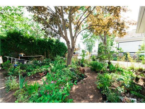 Photo 20: Photos: 2518 Shelbourne St in VICTORIA: Vi Oaklands House for sale (Victoria)  : MLS®# 730095