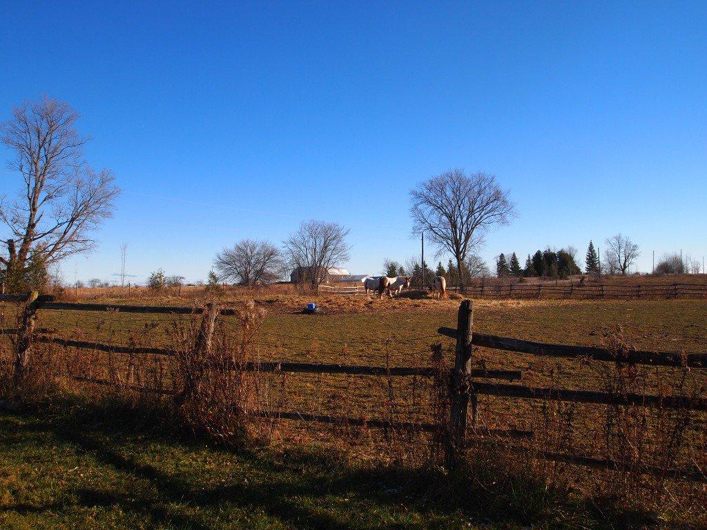 Photo 18: Photos: 547 Windmere Road: Woodville Freehold for sale (Kawartha Lakes)  : MLS®# X3661427