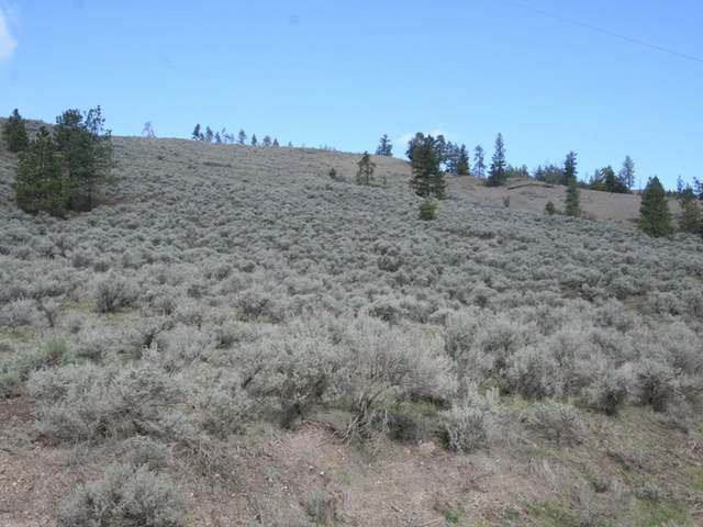 Photo 7: Photos: LOT B E SHUSWAP ROAD in : South Thompson Valley Lots/Acreage for sale (Kamloops)  : MLS®# 114131