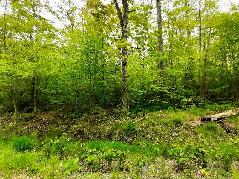 Main Photo: Lot N3 Nature Heaven Road in Lake Paul: 404-Kings County Vacant Land for sale (Annapolis Valley)  : MLS®# 202009525