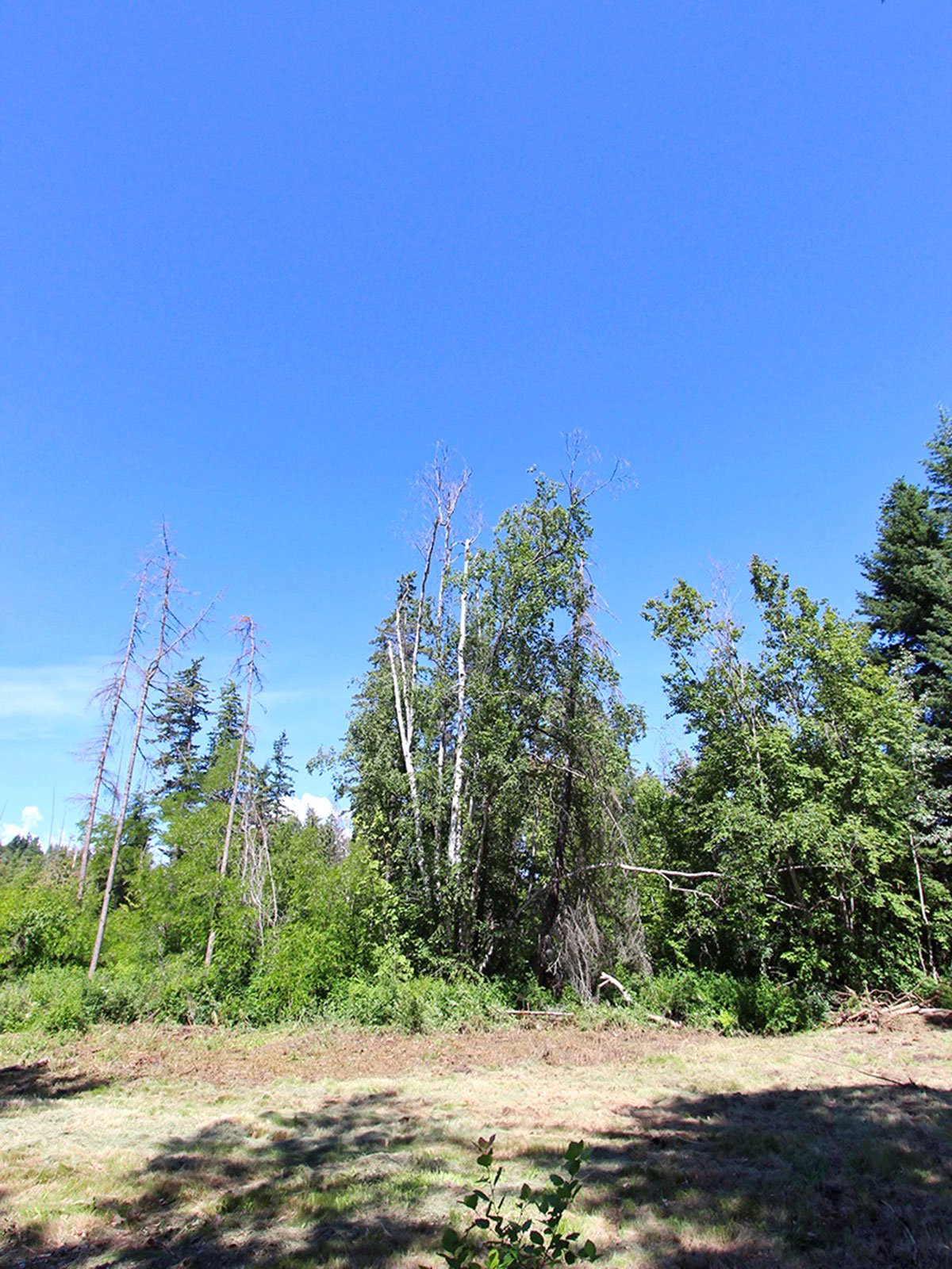 Photo 33: Photos: 663 Waverly Park Frontage Road in Sorrento, BC: Land Only for sale (Sorrento)  : MLS®# 10186241