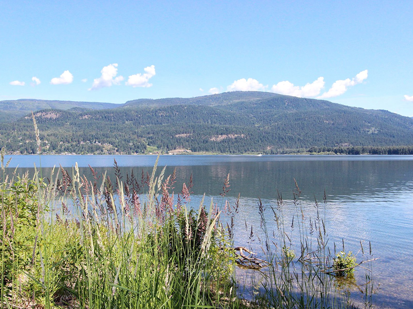 Photo 5: Photos: 663 Waverly Park Frontage Road in Sorrento, BC: Land Only for sale (Sorrento)  : MLS®# 10186241