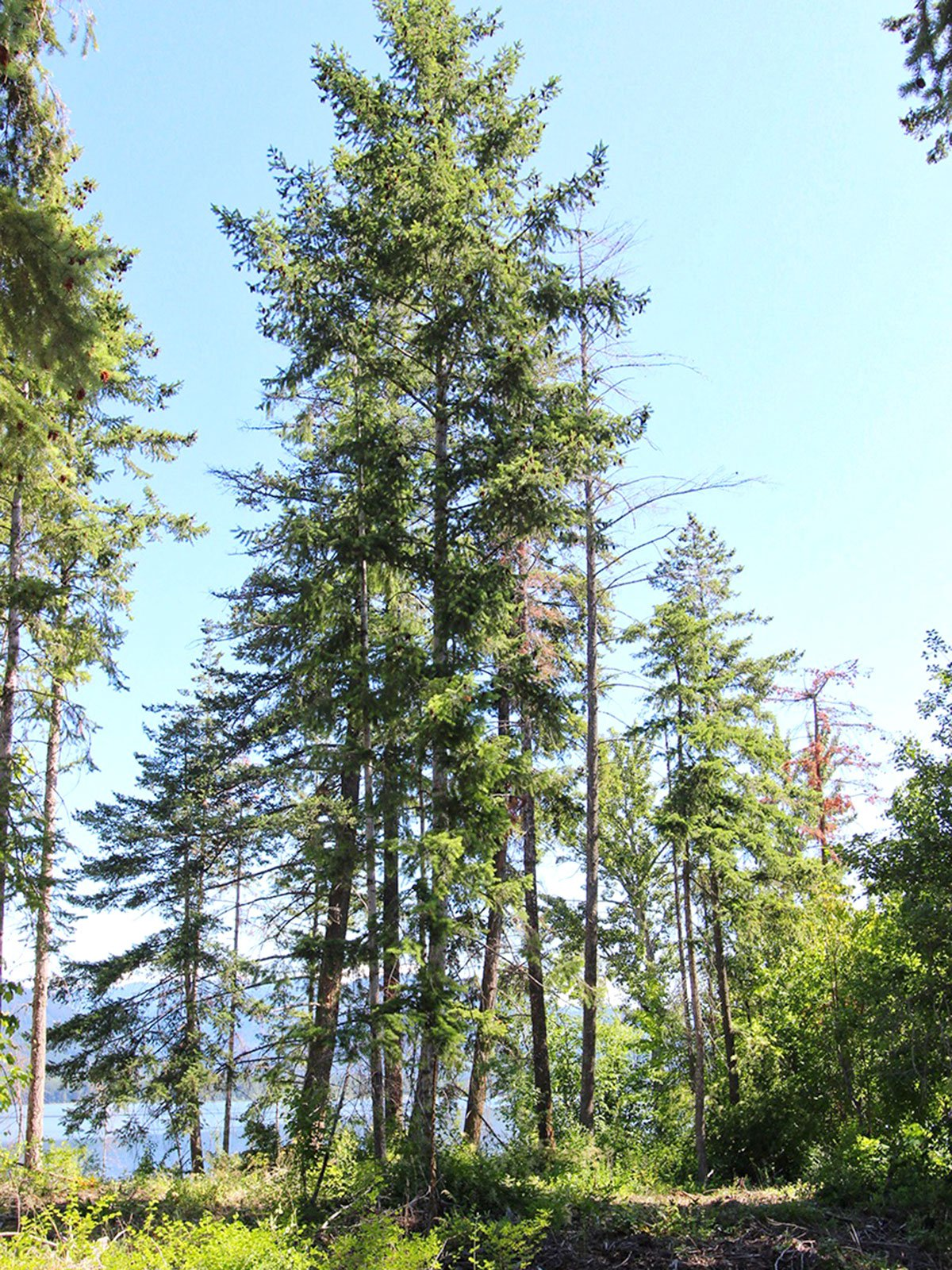 Photo 36: Photos: 663 Waverly Park Frontage Road in Sorrento, BC: Land Only for sale (Sorrento)  : MLS®# 10186241