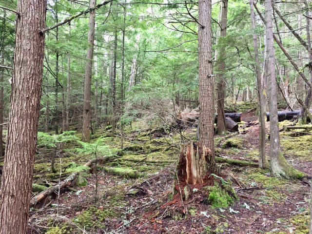 Photo 13: Photos: 3,4,6 Armstrong Road in Eagle Bay: Vacant Land for sale : MLS®# 10133907