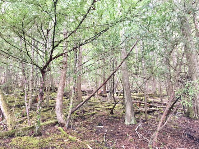 Photo 18: Photos: 3,4,6 Armstrong Road in Eagle Bay: Vacant Land for sale : MLS®# 10133907