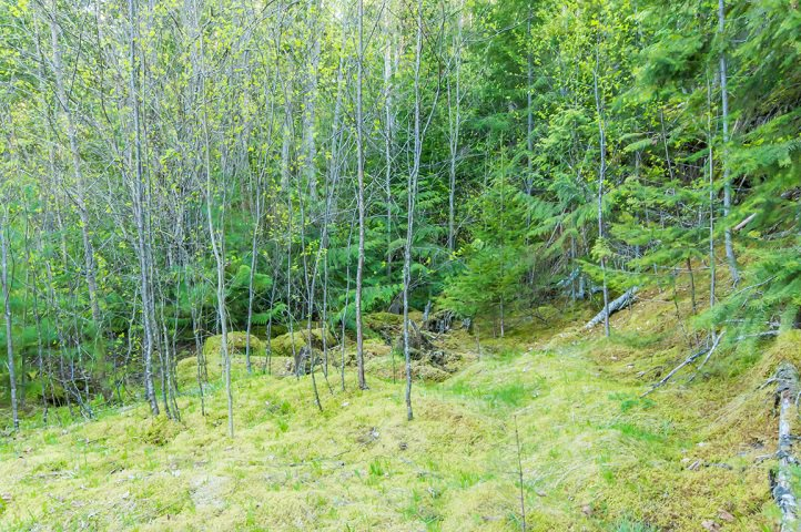 Photo 82: Photos: 3,4,6 Armstrong Road in Eagle Bay: Vacant Land for sale : MLS®# 10133907