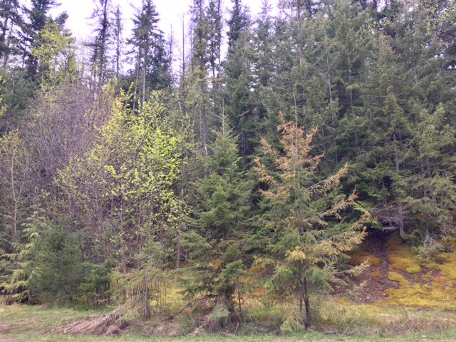 Photo 19: Photos: 3,4,6 Armstrong Road in Eagle Bay: Vacant Land for sale : MLS®# 10133907