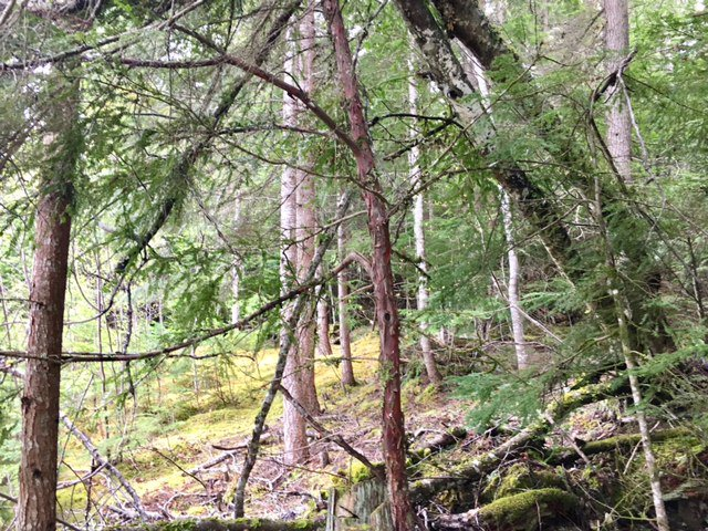 Photo 28: Photos: 3,4,6 Armstrong Road in Eagle Bay: Vacant Land for sale : MLS®# 10133907