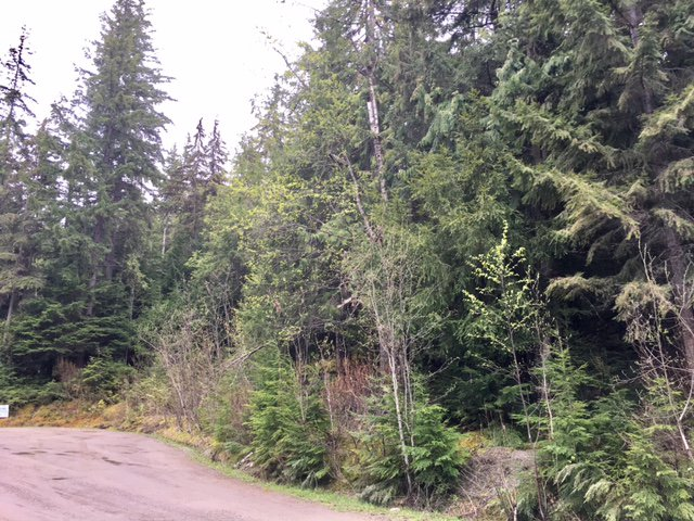 Photo 36: Photos: 3,4,6 Armstrong Road in Eagle Bay: Vacant Land for sale : MLS®# 10133907