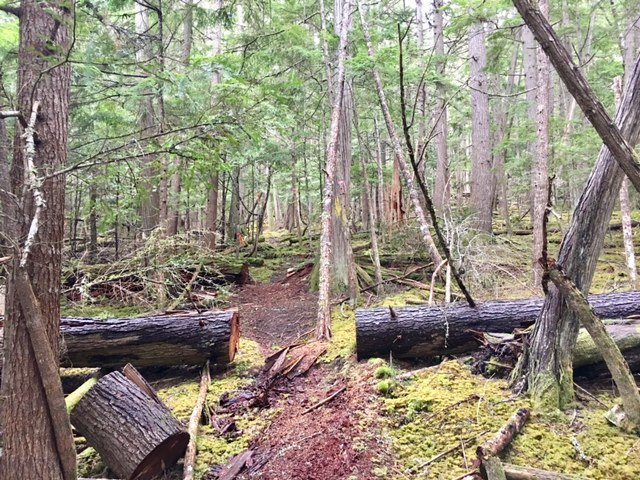 Photo 33: Photos: 3,4,6 Armstrong Road in Eagle Bay: Vacant Land for sale : MLS®# 10133907