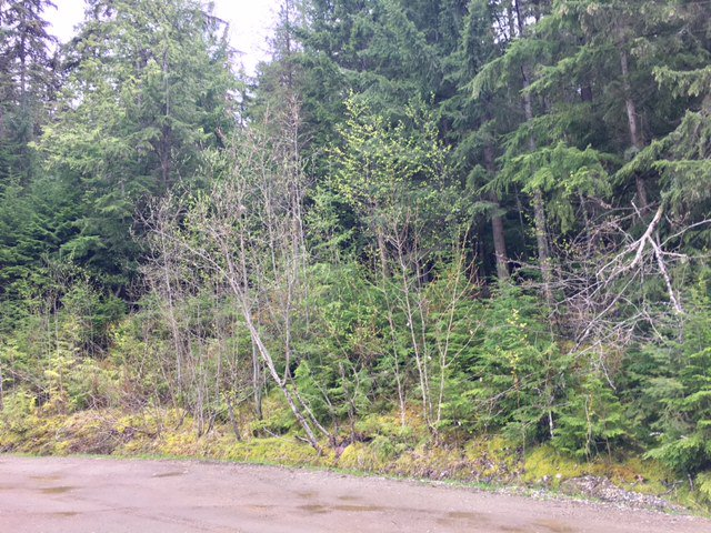 Photo 25: Photos: 3,4,6 Armstrong Road in Eagle Bay: Vacant Land for sale : MLS®# 10133907