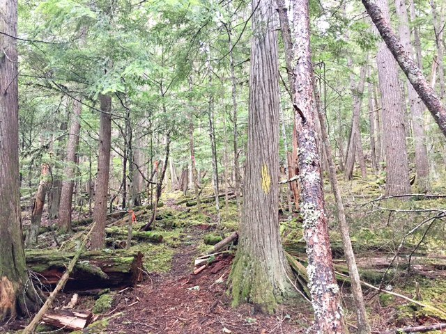 Photo 24: Photos: 3,4,6 Armstrong Road in Eagle Bay: Vacant Land for sale : MLS®# 10133907