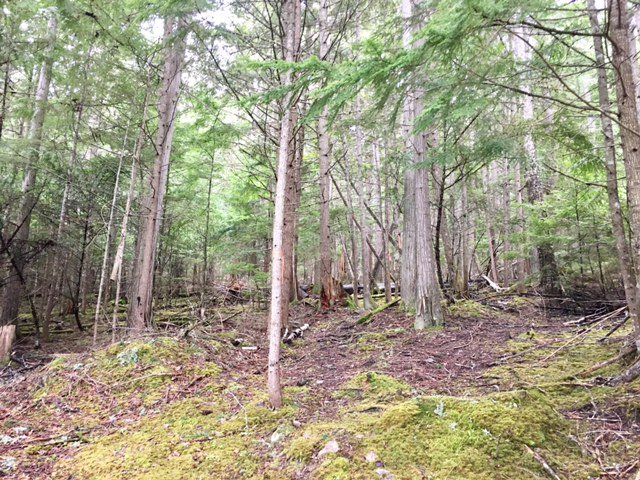 Photo 10: Photos: 3,4,6 Armstrong Road in Eagle Bay: Vacant Land for sale : MLS®# 10133907