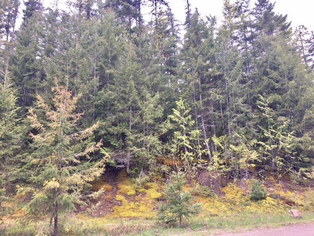 Photo 5: Photos: 3,4,6 Armstrong Road in Eagle Bay: Vacant Land for sale : MLS®# 10133907