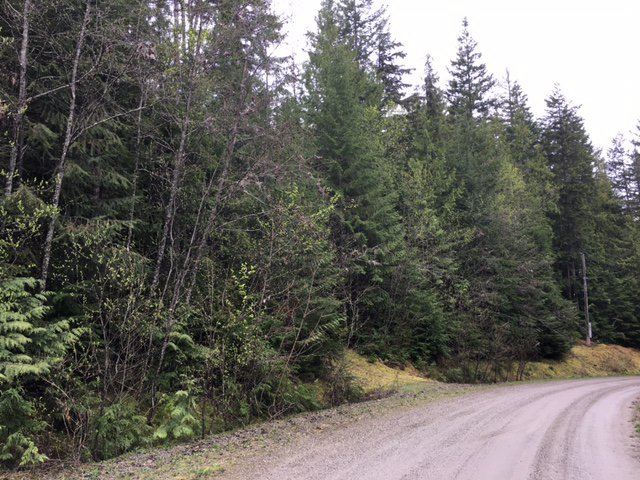Photo 40: Photos: 3,4,6 Armstrong Road in Eagle Bay: Vacant Land for sale : MLS®# 10133907