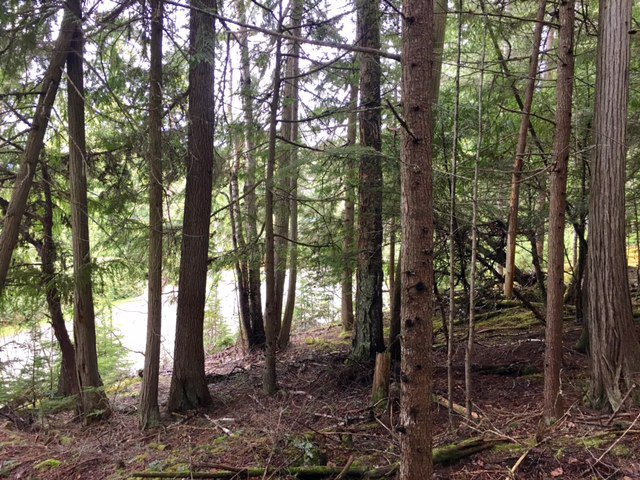 Photo 11: Photos: 3,4,6 Armstrong Road in Eagle Bay: Vacant Land for sale : MLS®# 10133907