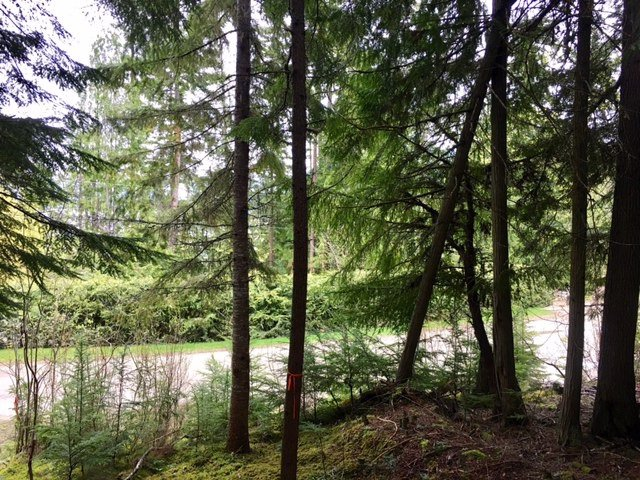 Photo 6: Photos: 3,4,6 Armstrong Road in Eagle Bay: Vacant Land for sale : MLS®# 10133907