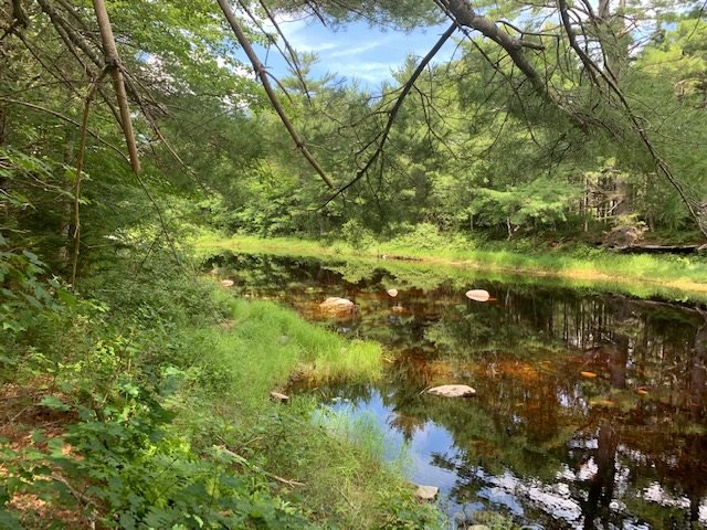 Photo 8: Photos: 103 Highway in Sable River: 407-Shelburne County Residential for sale (South Shore)  : MLS®# 202016107