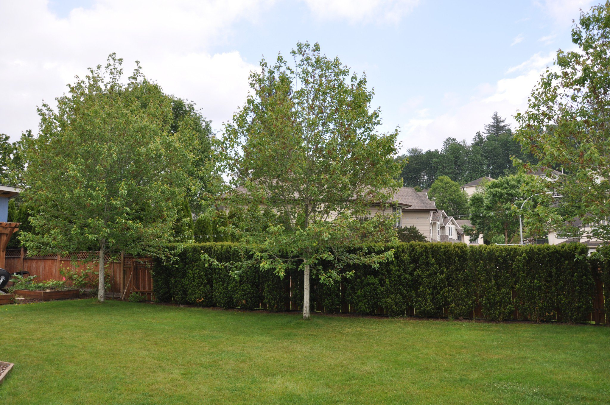 Photo 24: Photos: 4076 Channel St. in Abbotsford: Abbotsford East House for rent