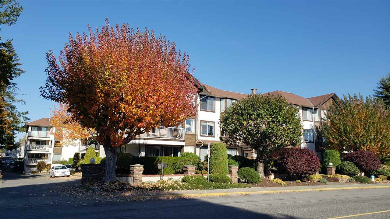 Main Photo: 203 33375 MAYFAIR AVENUE in Abbotsford: Central Abbotsford Condo for sale : MLS®# R2314397