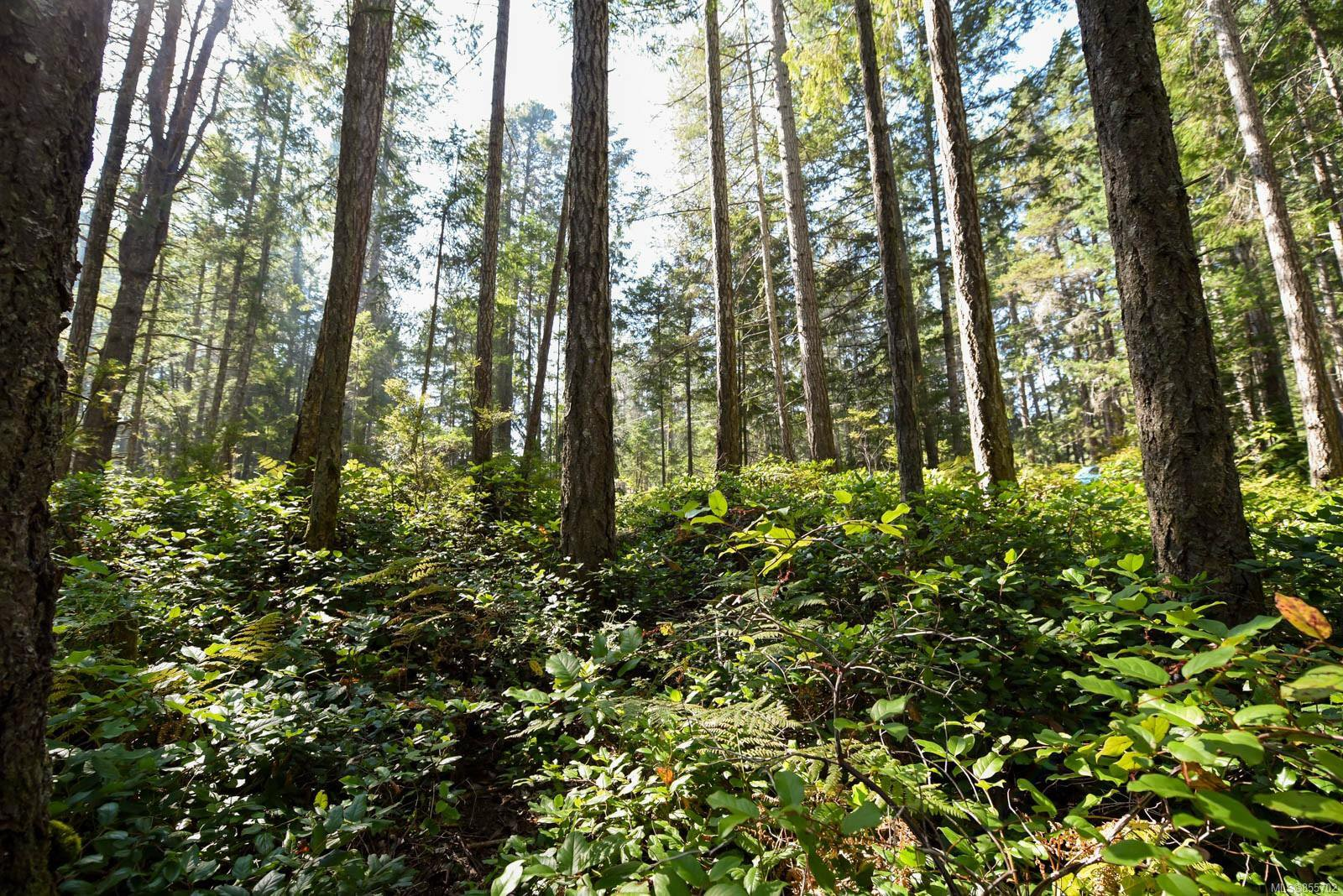 Main Photo: Lot 191 Brent Rd in : CV Comox Peninsula Land for sale (Comox Valley)  : MLS®# 855702