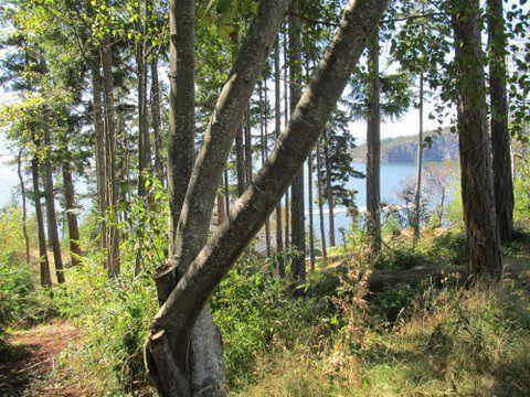"Photo 3: Photos: LOT 74 ALLEN CRESCENT in Pender Harbour: Pender Harbour Egmont Home for sale in ""DANIEL POINT"" (Sunshine Coast)  : MLS®# R2091829"