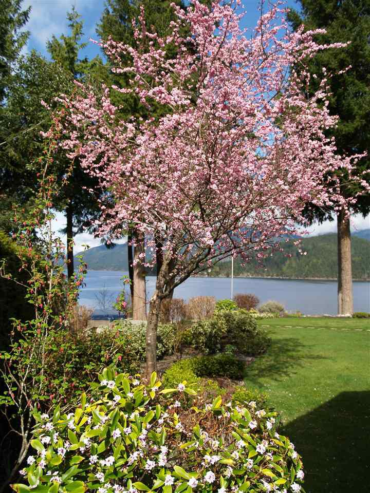 """Photo 20: Photos: 6478 N GALE Avenue in Sechelt: Sechelt District House for sale in """"THE SHORES"""" (Sunshine Coast)  : MLS®# R2201773"""