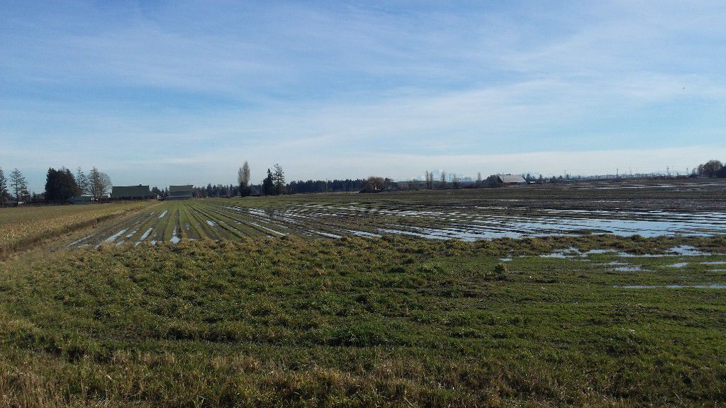 Main Photo: 5905 64 Street in Ladner: Land Commercial for sale : MLS®# C8003919
