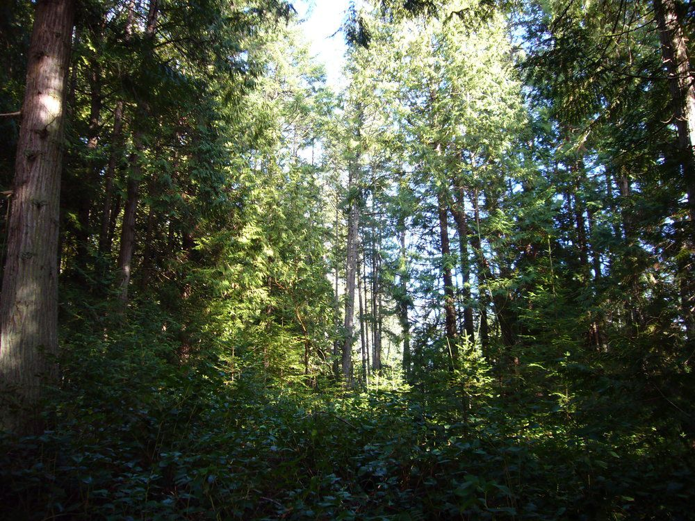 Main Photo: 97 Hollyberry Lane in Hollyberry Lane: Acreage for sale