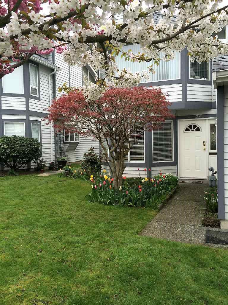 "Main Photo: 29 9261 122 Street in Surrey: Queen Mary Park Surrey Townhouse for sale in ""Kensington Gate"" : MLS®# R2319605"