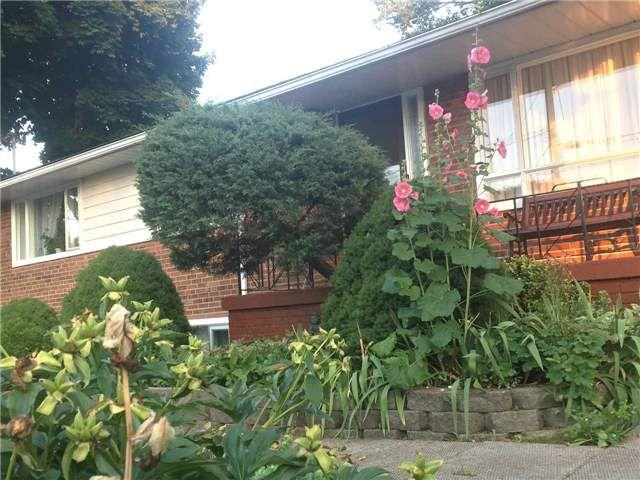 Main Photo: 41 Meadowacres Drive in Toronto: Tam O'Shanter-Sullivan House (Bungalow) for sale (Toronto E05)  : MLS®# E4202792