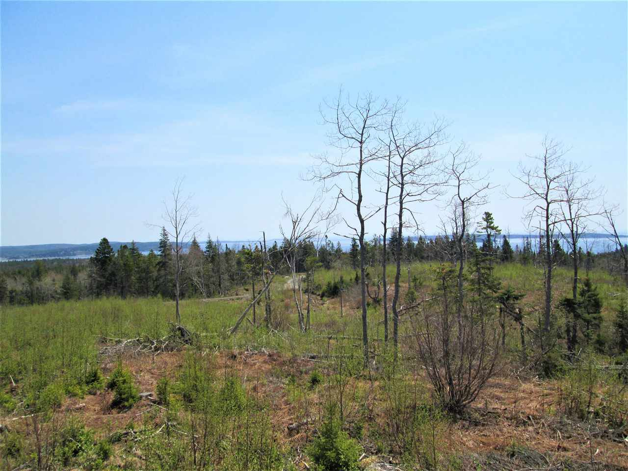 Photo 2: Photos: 3 lots Highway 331 in Dublin Shore: 405-Lunenburg County Vacant Land for sale (South Shore)  : MLS®# 201712817