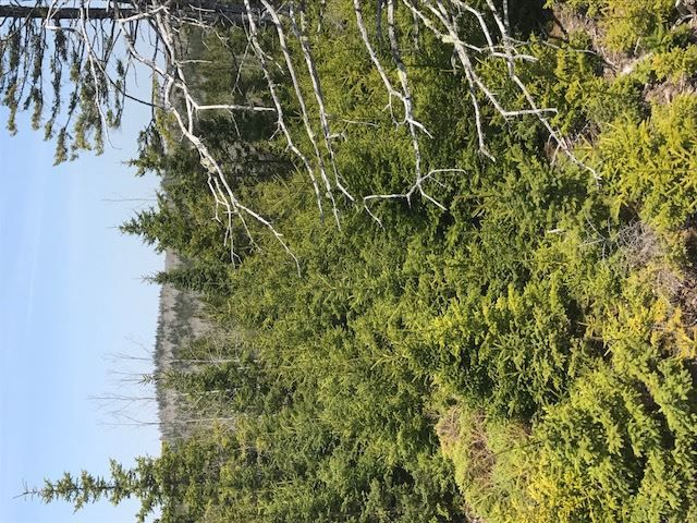 Photo 8: Photos: 3 lots Highway 331 in Dublin Shore: 405-Lunenburg County Vacant Land for sale (South Shore)  : MLS®# 201712817
